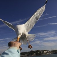Чайка :: Наталья Курманалиева