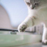 Кошки - Мушки :: Михаил Кучеров