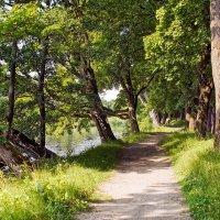 прогулки у реки :: Владимир Матва