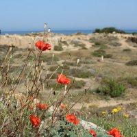 на Кипре :: Ольга Маркелова