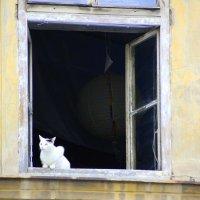 חלון  окно :: vasya-starik Старик