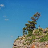 И на камнях растут деревья... :: Ирина Бабушкина