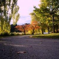 Гуляем по осеннему парку... :: Юрий Поляков