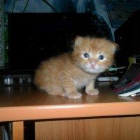 Мой котенок :: Евгения Ломакина
