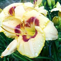Flowers stare longingly love, sinless clean  as spring ... :: Stephanie Plebeyskaya