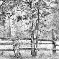 На окраине  леса :: Юрий Савинский