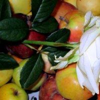 Цветочно - яблочный букет. :: Люда Валяшки