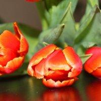 три тюльпана :: Таня Фиалка