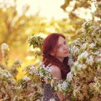 Яблонев цвет :: Женя Рыжов