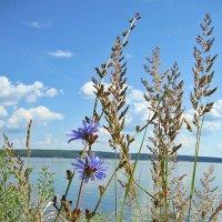 Летние цветики :: Лидия (naum.lidiya)
