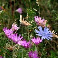Степные цветы :: Marina Timoveewa