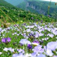 Долина цветов :: Ольга Голубева