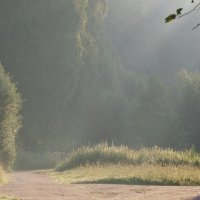 Солнечное утро :: Юрий Цыплятников