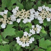 Калины цвет... :: Тамара (st.tamara)