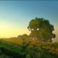 туманное утро на берегу Упы :: Дмитрий Анцыферов