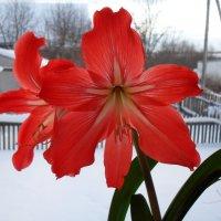 Зима за окном :: Дионисий Великий
