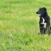 В траве сидел... :: Алексей Хаустов