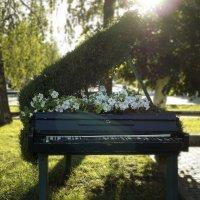 рояль в кустах :: лиана алексеева