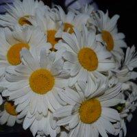 Ромашки для очаровашки :: Таня Фиалка