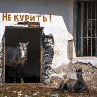 Не курить! :: Сергей Митченко