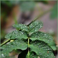 После дождя... :: Aquarius - Сергей