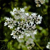 Цветок в огороде :: юрий Амосов
