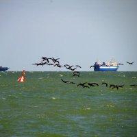 Полёт бакланов над морем :: Marina Timoveewa