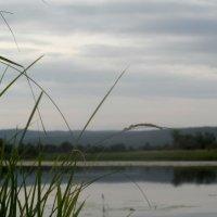 Прекрасный водоем :: Варвара Шонгина