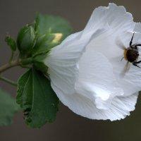 Для ассортимента цветочки... :: ФотоЛюбка *