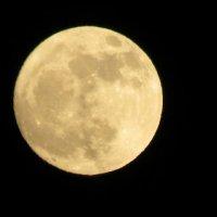 Луна :: Екатерина Амирова