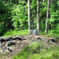 В лесу :: Ольга Иргит