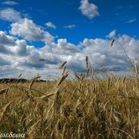 Летний день :: Светлана Медведева