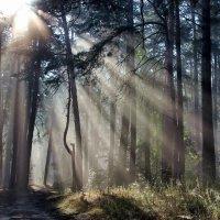На струнах солнечных лучей... :: Лесо-Вед (Баранов)