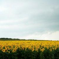вот где солнышки растут :: Tatiana Florinzza