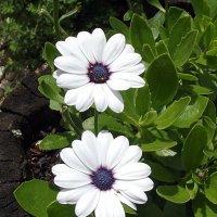 Летние цветы :: Freddy 97