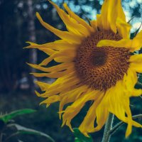 Маленькое солнце :: Perry Murray