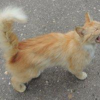 Соло :: Кот Kot