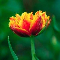 цветочек :: Дмитрий Гуреев