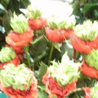 Выставка цветов. Розы. :: Galina194701