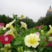 Цветочная клумба на фоне Исаакиевского собора в Питере :: Сергей Васильевич