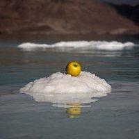 Яблоко на снегу? :-) :: Марина Жужа