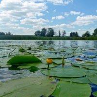 На озере. :: Чария Зоя
