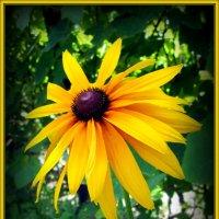 Портрет солнечного цветка. :: Люда Валяшки