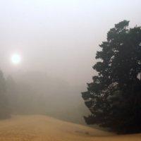 Ностальгии солнечный туман... :: Лесо-Вед (Баранов)
