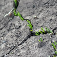 засуха :: Ларико Ильющенко