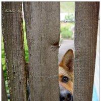 Соседский пёс :: Кай-8 (Ярослав) Забелин
