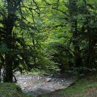 горная речка и заросший мхами лес :: Светлана Фомина