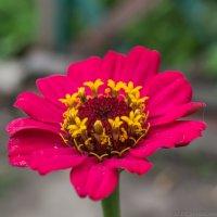 Аленький цветочек :: Алексей Масалов