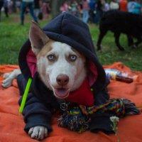 Собаки тоже мерзнут :: Oili Karpova