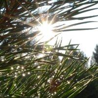 Солнечные искры :: Юлианна Евгеньевна